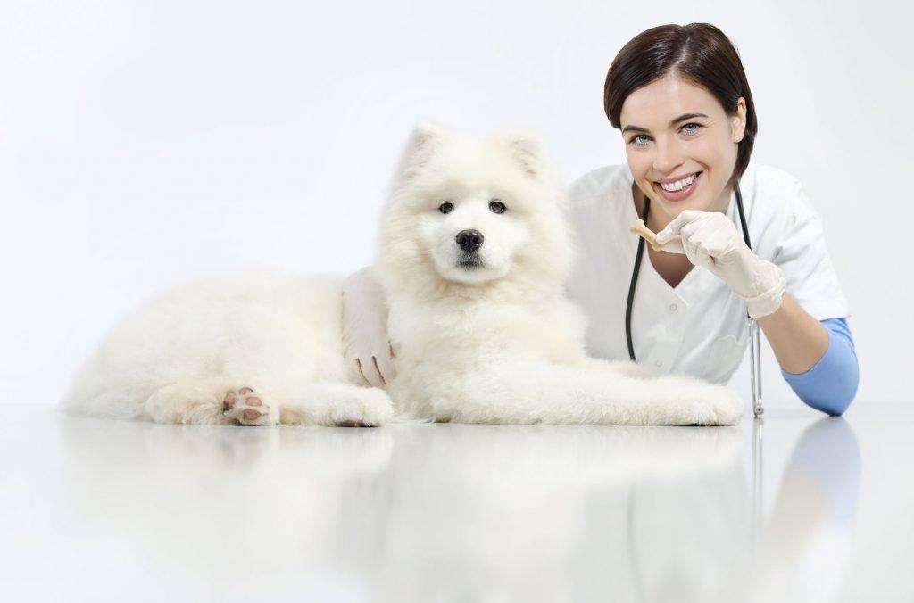Las terapias psicológicas para perros y gatos se triplican en un año 1