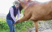 curso enfermería veterinaria