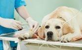 Nociones básicas sobre anestesia veterinaria 5