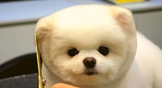 montar-una-peluquería-canina