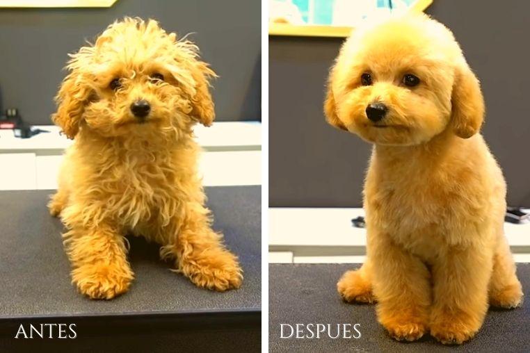 peluquería-de-mascotas