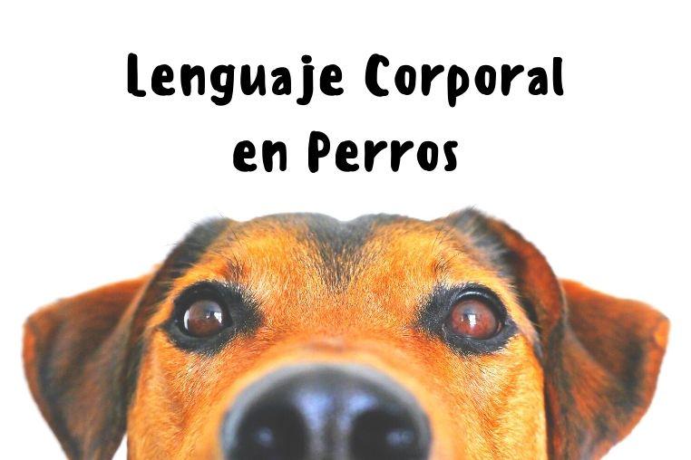 lenguaje corporal canino