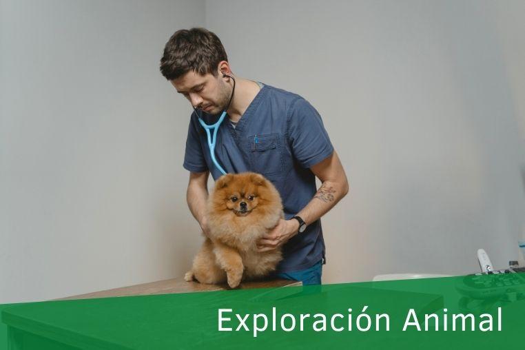 Exploración Física Veterinaria